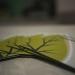Praxisnetz Homöopathie – Innenansicht  Ordination